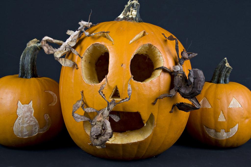 international halloween treats cover image munchpak